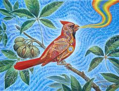 Alex Grey - energetics of a snowbird - cardinal ~ ~ I'm so grateful to the soul who introduced me to this artist