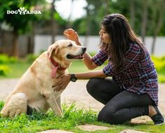 Dogzadda is a pet shop to find puppies, Dogs for sale in India. We have the best pet products & pet services like grooming and more services in Hyderabad. Dogs For Sale, Hyderabad, Pet Shop, Dog Lovers, Labrador Retriever, Puppies, Pets, Travel, Animals