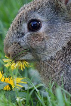 ˚Young Wild Rabbit