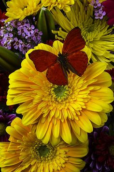 Red Butterfly On Yellow Daisy by Garry Gay