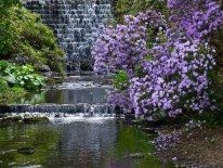 Beautiful waterfall in the Gardens at Harewood House © Peter Stubbs Beautiful Waterfalls, Beautiful Landscapes, Harewood House, Historic Homes, 18th Century, Landscape Design, Greenery, Things To Do, England