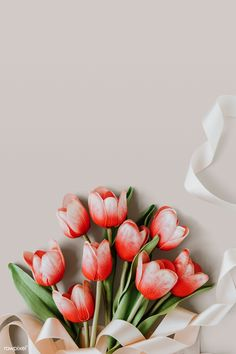 Red and white tulip on blank beige background template Red And White Flowers, White Tulips, Pink Tulips, Tulips Flowers, Pretty Flowers, Rare Flowers, Purple Roses, Flowers Garden, Fresh Flowers