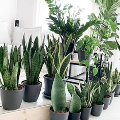 Tamara (@my_green_home_and_me) • Instagram-Fotos und -Videos Cactus Plants, Instagram, Garden, Videos, House, Garten, Gardens, Video Clip, Tuin