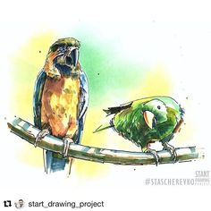 Автор: @start_drawing_project #stascherevko #startdrawing #скетч #скетчинг #арт #рисунок #набросок #зарисовка #маркеры #скетчбук #sketch #sketching #sketchbook #instaart #sketch_ru #попугай #попугаи