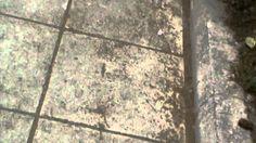 Ανακαινιση τωρα How To Dry Basil, Herbs, Herb, Medicinal Plants