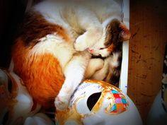 good night ....