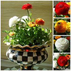 Courtly Check Stoutly Vase with bright and bold Ranunculus.