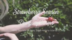 Pick Your Own Strawberries | Strawberry Picking | South Carolina | Fresh Fruit | Dempsey Farms | Strawberry Patch Field | UPick Strawberries | Couple | The Lills | Video