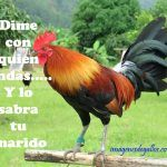 Imagenes De Gallos Con Frases Perronas Para Descargar Gratis Rooster Breeds, Game Fowl, Amor Animal, Chicken Breeds, Facebook, Tattoos, Motivational Quotes, Good Morning Beautiful Images, Rooster Art