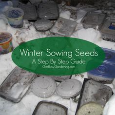 Winter Sowing Seeds - A Step By Step Guide