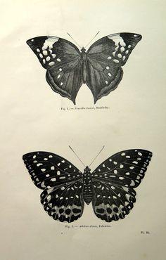 Antique papillon imprimer, 1860 lépidoptères français planche originale gravure, illustration insecte, animal zoologie vintage papillon pour l'encadrement