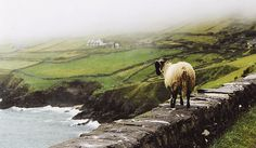 Slea Head Drive, Ireland - one of the most beautiful places in the world.