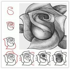 How to sketch a rose step by step DIY tutorial instructions: