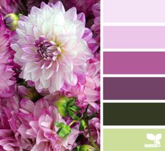 Dahlia Hues - http://design-seeds.com/index.php/home/entry/dahlia-hues4