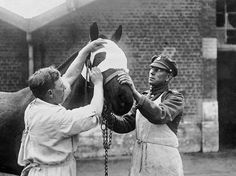 WW1, 1916. A Vet tends a wounded British horse hit by shrapnel, Western Front. ©…