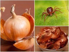 Garden Pests, Pest Control, Organic Gardening, Kustom, Planting Flowers, Onion, Home And Garden, Vegetables, Plant