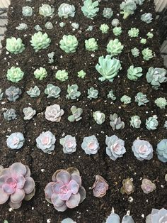 Learn to make hundreds of succulents in a couple of . Succulent Leaf P Indoor Vegetable Gardening, Succulent Gardening, Succulent Terrarium, Planting Succulents, Planting Flowers, Organic Gardening, Succulent Plants, Cactus Plants, Terrariums