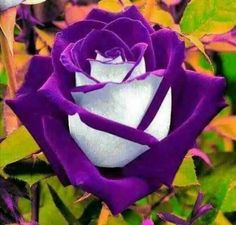 Purple..gonna pin this to my bridal board too..