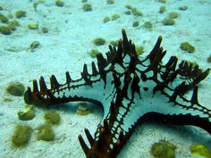 Spikey starfish by mattk1979, via Flickr