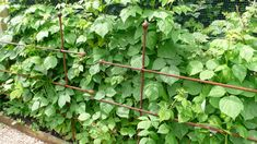 Raspberry Canes, Fruit Cage, Fruits And Vegetables, Fruits And Veggies