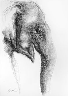 Pin by nicole snow on drawing ideas рисунки, карандаш Elephant Sketch, Elephant Artwork, Pencil Drawings Of Animals, Animal Sketches, Couple Drawings, Easy Drawings, Cool Sketches, Drawing Sketches, Art Simple