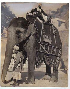 Maharaja's Elephant, Jaipur India.