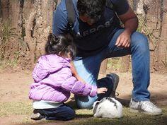 El Departamento de Mamá: VISITANDO A LOS ANIMALES