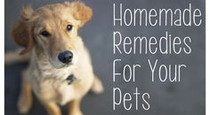 Homemade Essential Oil Remedies For Pets ~ some great remedies for Dogs