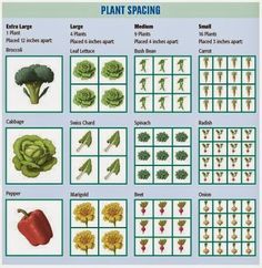 Square Foot Gardening. Plant spacing.