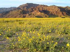 Death Valley National Park, would be nice in the winter when it's actually pleasant there, and miserable here in Ohio.