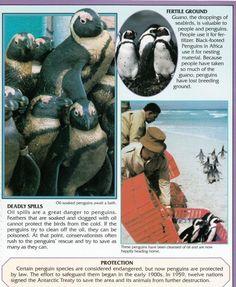 Penguin Facts | Penguin Place Penguin Facts, Sea Birds, Penguins, Africa, Places, Nature, Animals, Naturaleza, Animales