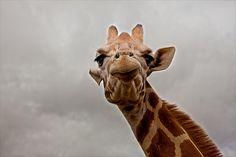 I think I make a face similar to this... Lol