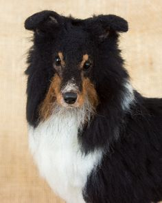Keegan the Shetland Sheepdog: Needle felted animal sculpture by Megan Nedds of The Woolen Wagon