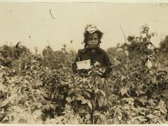 size: Photographic Print: Annie Bissie Picking Berries in the Fields Near Baltimore, Maryland, 1909 by Lewis Wickes Hine : Old Photos, Vintage Photos, White Tractor, Lewis Hine, American Children, Back In The Day, Vintage Photography, Fashion History, Fields