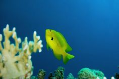 Image from http://www.earthtimes.org/newsimage/fish-competition-degraded-coral-reef-ecosystems_20712.jpg.