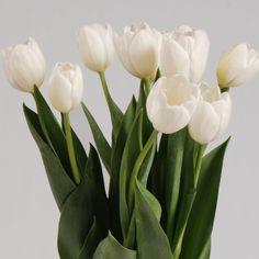 500x500-TulipsWhite
