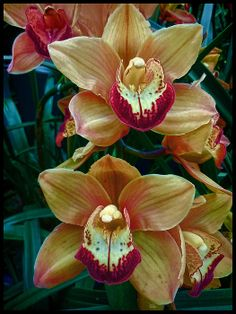 Peach and Red Orchids - photograph by Douglas MooreZart. Fine art prints and posters for sale. #douglasmoorezart #photography #orchid
