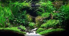 Aquascape Aquarium Design Ideas 7