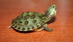 Tortugas Archives - Página 2 de 5 - Animal Mascota