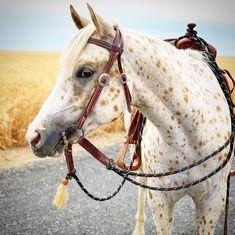 Appaloosa, Horses, Animals, Animales, Animaux, Animal, Animais, Horse, Appaloosa Horses