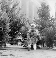 Vintage Holiday: Christmas Tree In Paris In 1956 - A little girl picking her Christmas tree at the flower market of the Madeleine, in Paris, on December (Photo by Keystone-France/Gamma-Keystone via Getty Images) Christmas Tree Scent, Christmas Tree Images, Old Time Christmas, Vintage Christmas Photos, Ghost Of Christmas Past, French Christmas, Old Fashioned Christmas, Christmas Scenes, Christmas Mood