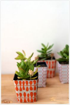 This template can be traced onto any wrapping paper, then folds perfectly around a standard plastic plant container. #camillestyles #diy #succulents