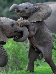 Oh, those crazy baby elephants. Cuties.