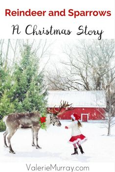 Reindeer and Sparrows, is a heart-warming short Christmas story, to remind you of God's constant care for you, even when you don't understand His ways. Christian Marriage, Christian Women, Christian Living, Christian Faith, A Christmas Story, All Things Christmas, Christian Resources, Christian Encouragement, Christmas Activities