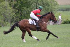 Konie na zawodach