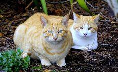 Gatos, Animais, Animal De Estimação