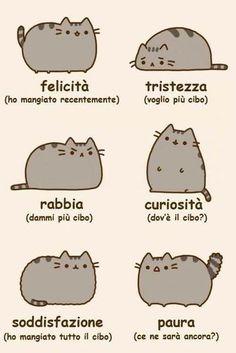 Le emozioni di un gatto