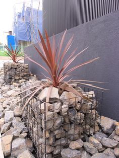 Drought Resistant Landscaping, Dry Garden, Modern Industrial, Fence, Cool Designs, Yard, Exterior, Display, Landscape