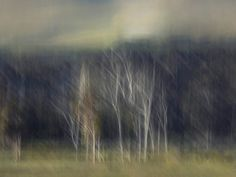 Ethereal impressionism has been achieved in this stunning print collection using a combination of brushed camera movement and lighting. Low edition numbers for collections and bespoke art investors. Photography Gallery, Abstract Photography, Fine Art Photography, Border Print, International Artist, Renaissance Art, Impressionism, Fine Art Paper, Ethereal