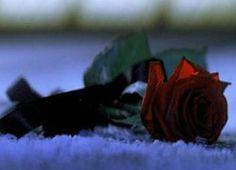 Phantom of the Opera Movie Stills | Roses - ALW's Phantom of the Opera movie Photo (1646899) - Fanpop